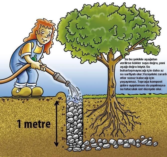 Meyve Ağaçları Nasıl Sulanmalı?